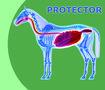 Healthy-Gut-Protector-2-en-5-kg
